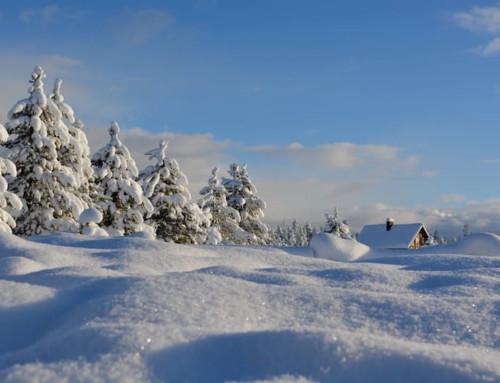 Winter Detox